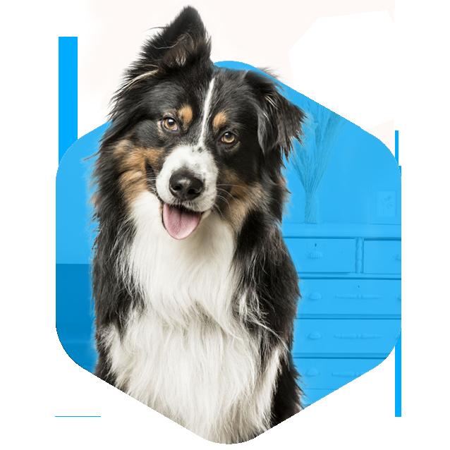 addestramento cani milano adulti educazione mini