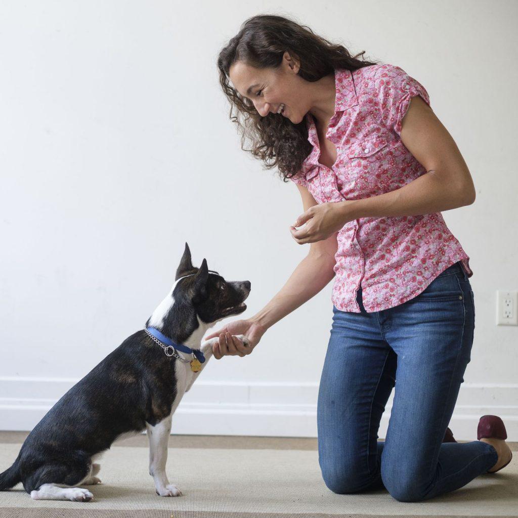 addestramento cani milano domicilio
