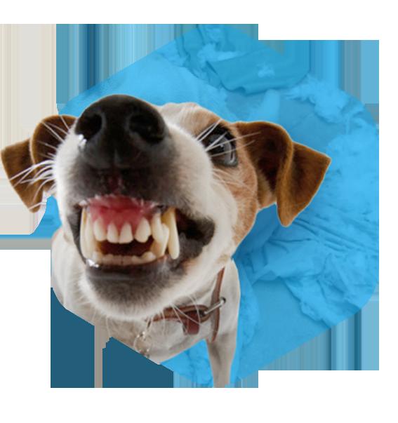 addestramento cani milano rieducazione comportamentale
