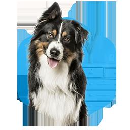addestramento cani milano educazione adulti domicilio