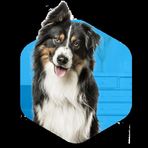 addestramento cani cuccioli milano