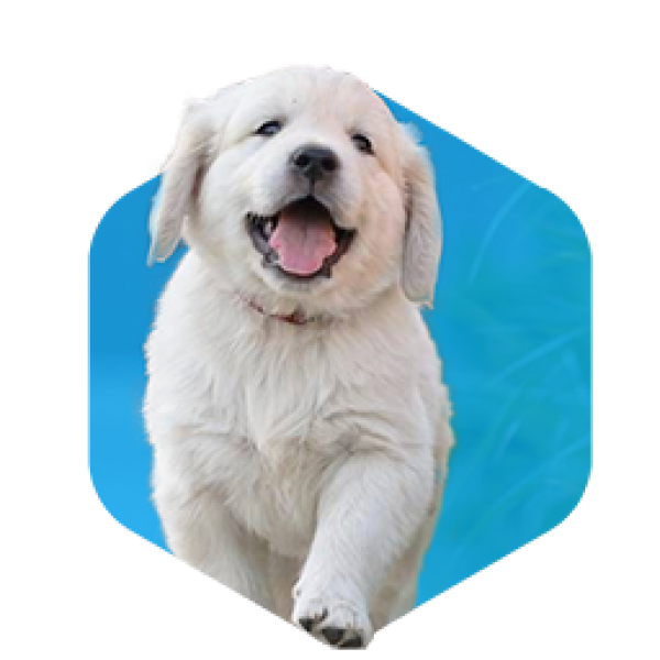 addestramento-cani-milano-cuccioli-1