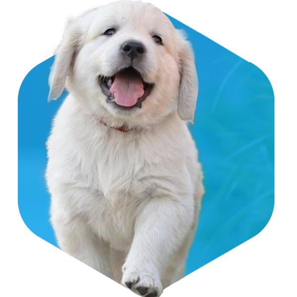 addestramento cani milano cuccioli educazione mini