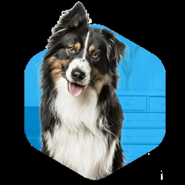 addestramento-cani-milano-educazione-adulti-1