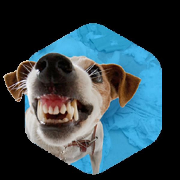 addestramento-cani-milano-rieducazione-1